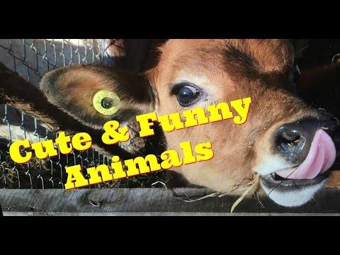 and making funny noises   funny animal sound compilation part 2
