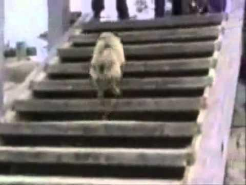 Try Not To Laugh Best Animals Fail Wins Compilation Ever Funny Hahahah